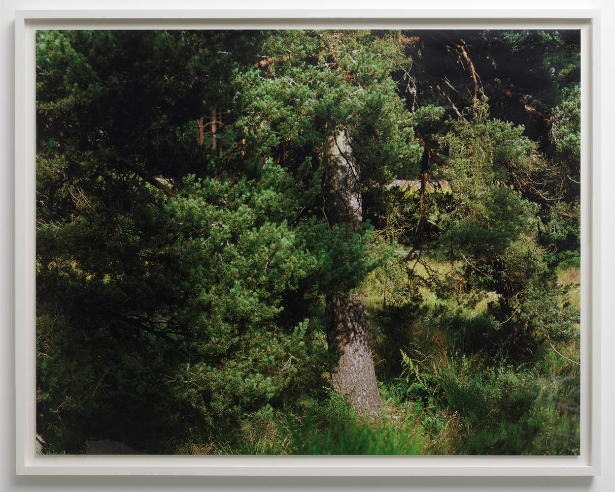 géraldine jeanjean, arbre