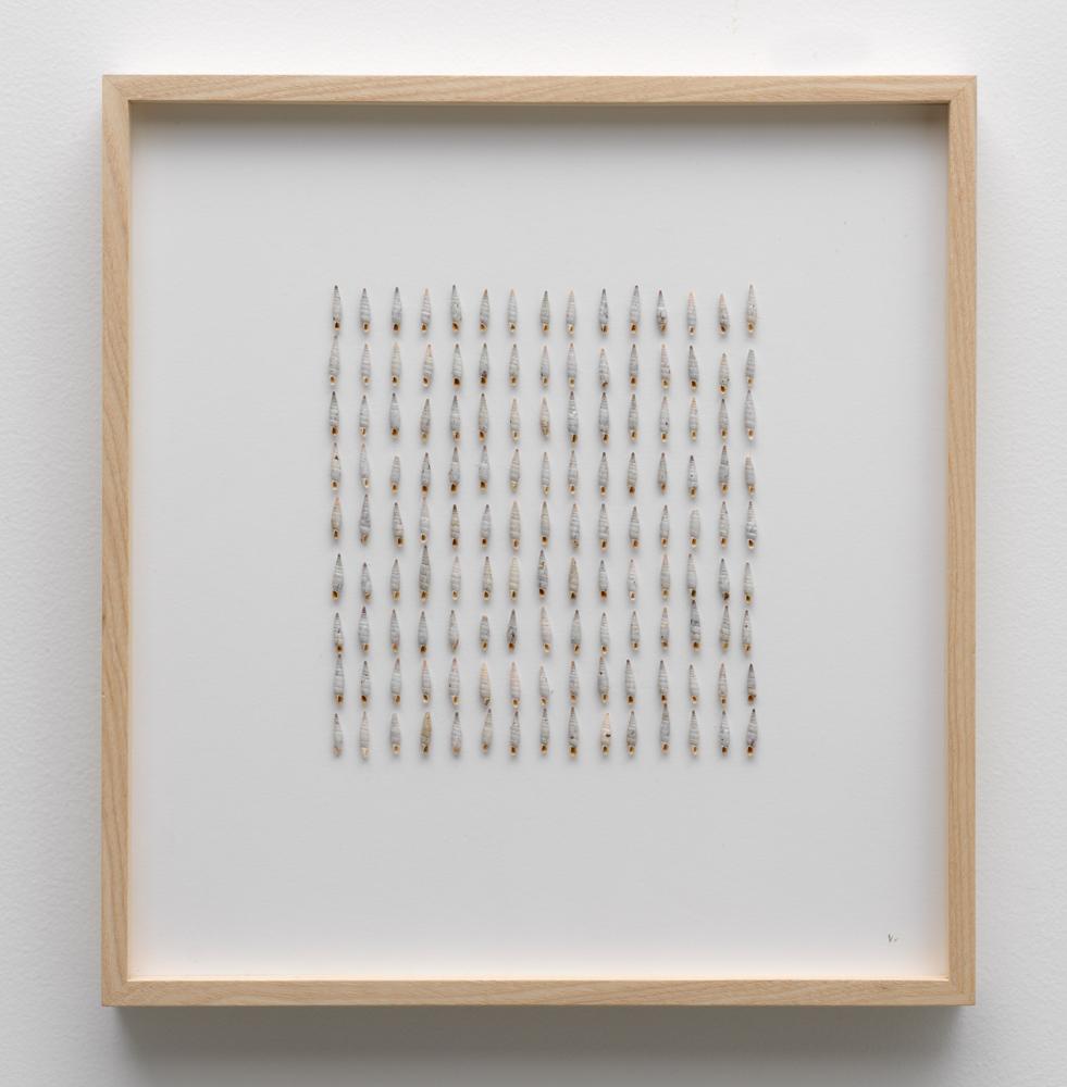 herman de vries, untitled: gavdos, 2016